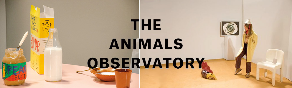 The Animals Observatory, TAO, ����, bobochoses�Υǥ����ʡ�Laia��Ω���夲�����֥���
