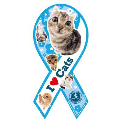THE CAT リボンマグネット(ブルー)アメリカンショートヘア&スコティッシュホールド