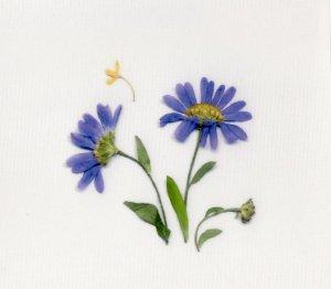 花柄(押し花)シール・青2