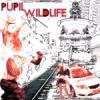 Pupil / Wildlife