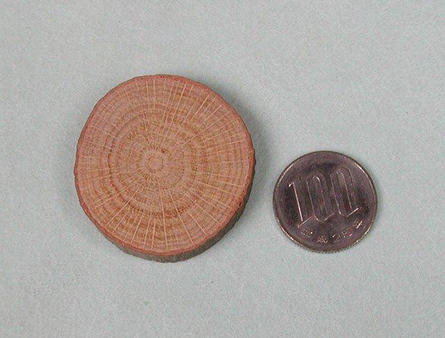 カシの木の輪切り板(中)