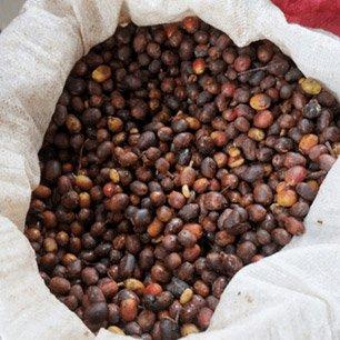 ニカラグア カサブランカ農園ハイランド パカマラ