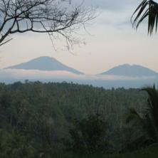 バリアラビカ 神山