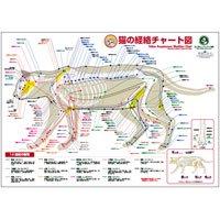猫の経絡(ツボ)チャート図ポスター