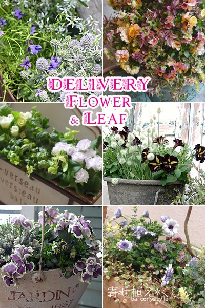 Delivery Flower&Leaf花苗定期便