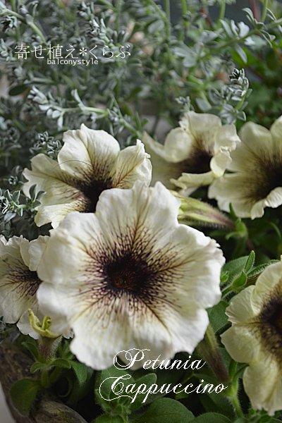 夏の寄せ植えセットペチュニアカプチーノほか2種+シャビーパニエポットジュートハンドル