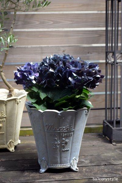 秋色紫陽花ハイドランジアディープパープル