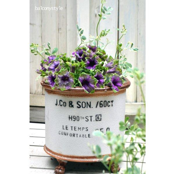 ペチュニア紫翠