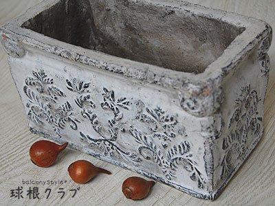 原種系チューリップと陶器ポットのセット