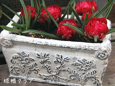 クラシカルなレリーフ模様ところっとしたテタテタの花
