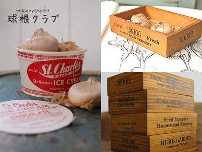サフラン球根を楽しむ木箱・アイスクリームカップ・ホウロウデミのポットセット