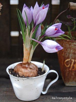 アンティークスタイルのホウロウデミカップポット2個セットガーデニング雑貨鉢カバー