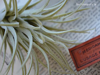 室内・ベランダのデコレーションに便利なチランジアのフェイクグリーン