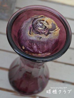 スリムな紫色のガラスポットなどの水栽培やフラワーベースに