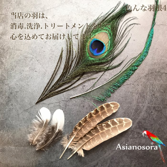 Various feather .4