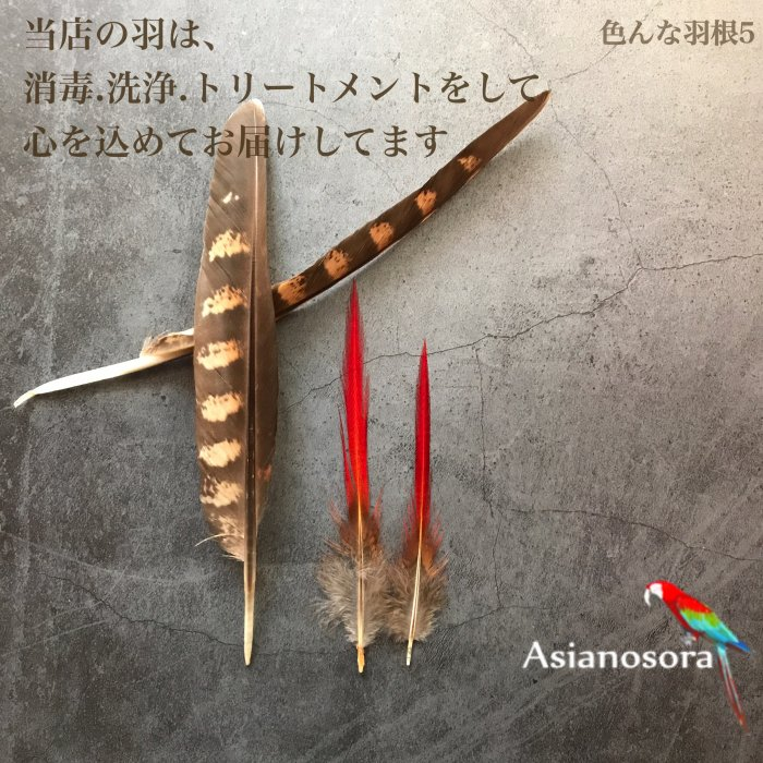 Various feather .5