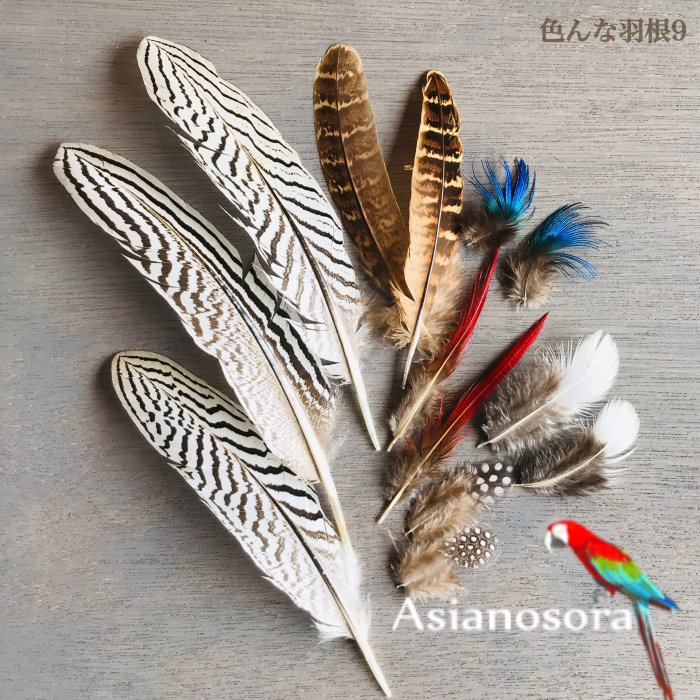 Various feather .9