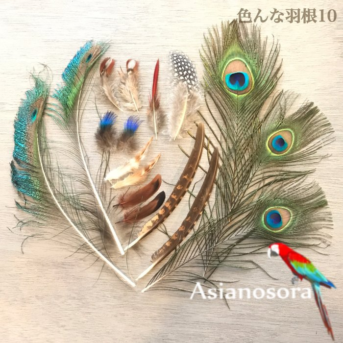 Various feather .10