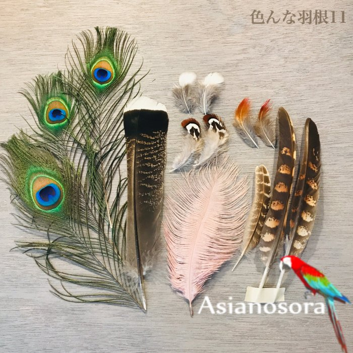 Various feather .11