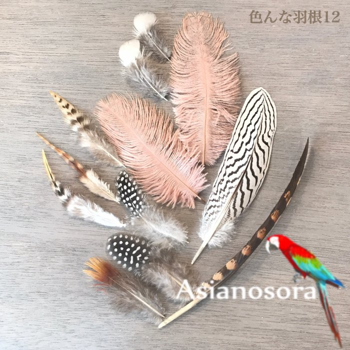 Various feather .12