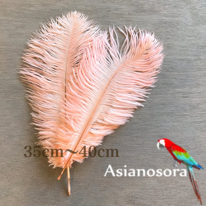 Ostrich feather 35-40P