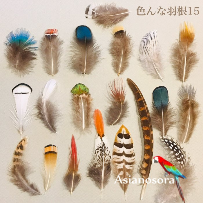 Various feather .15