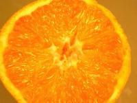 バレンシャオレンジ キズあり家庭用5キロ  送料無料サービス品