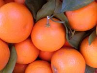 清見オレンジ 家庭用5キロ 送料無料