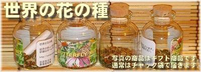 世界の花の種ver. Fukuoka