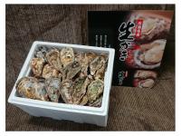 江田島産 殻付かき8kg