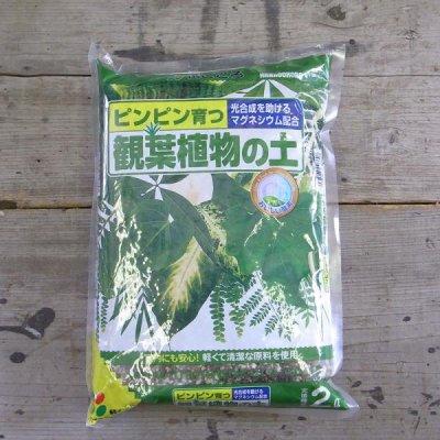 園芸用土 花ごころ 観葉植物の土 2L