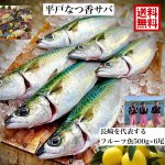 <img class='new_mark_img1' src='https://img.shop-pro.jp/img/new/icons5.gif' style='border:none;display:inline;margin:0px;padding:0px;width:auto;' />平戸なつ香サバ 約500g×2尾