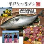 平戸なつ香ブリ 6kg (長崎県平戸沖養殖)