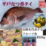 平戸なつ香タイ 2kg (長崎県平戸沖養殖)送料無料