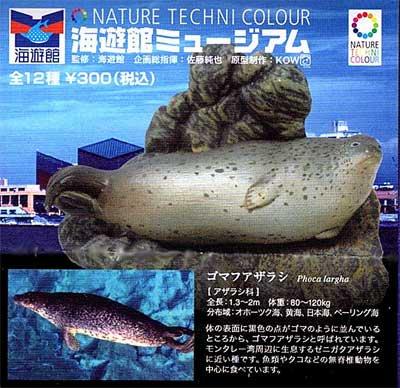 海遊館限定 NATURE TECHNI COLOUR 海遊館ミュージアム ゴマフアザラシ TC0097