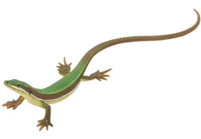 キタンクラブ ネイチャーテクニカラーMONO トカゲ・ヤモリフィギュアマスコット アオカナヘビ(オス) TC0138