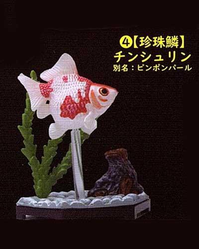 ビーム 金魚立体図鑑 フル彩色フィギュア  珍珠鱗(チンシュリン) TC00527
