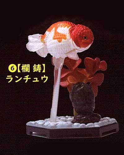 ビーム 金魚立体図鑑 フル彩色フィギュア  蘭鋳(ランチョウ) TC00525