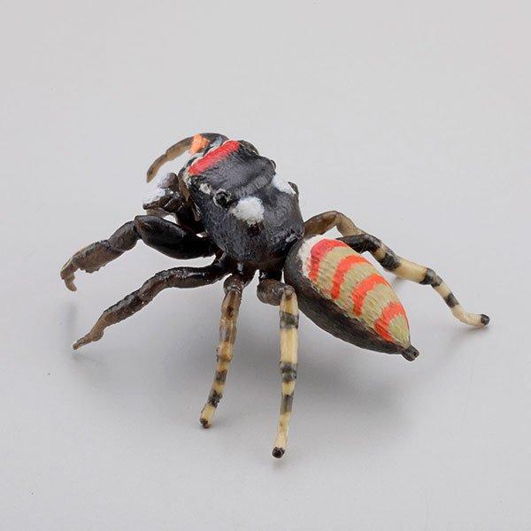海洋堂 カプセルQミュージアム 日本の蜘蛛ストラップコレクション クモコレ! ヨダンハエトリ KG00563 1枚目