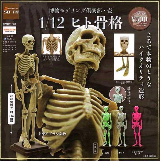 11月発売予定 SO-TA 博物モデリング倶楽部・壱 1/12 ヒト骨格  全4種フルセット
