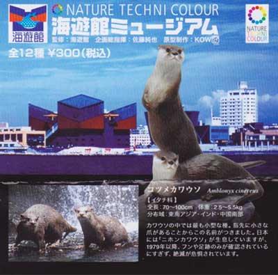 海遊館限定 NATURE TECHNI COLOUR 海遊館ミュージアム コツメカワウソ TC0096