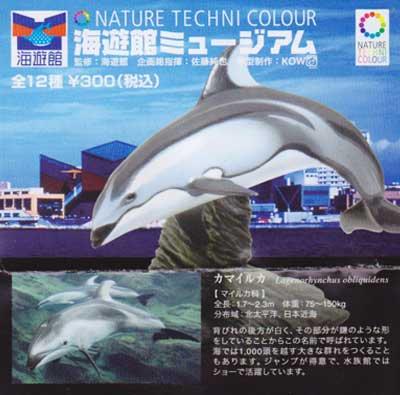海遊館限定 NATURE TECHNI COLOUR 海遊館ミュージアム カマイルカ TC0095