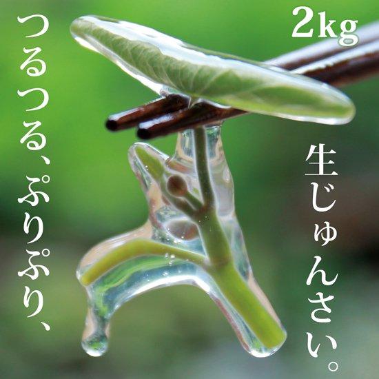 生じゅんさい2kg【季節限定!採れたて!日本一のじゅんさいの産地秋田県三種町のじゅんさいです。】