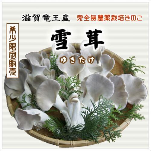 雪茸(ゆきたけ)生 150g(滋賀竜王産)