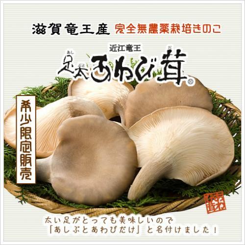 足太あわび茸(生)特選 500g(滋賀竜王産)