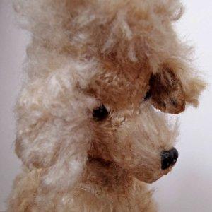 ハンガリー モフモフ プードル アイボリー グラスアイ  hungary poodle cream fluffy glass eyes