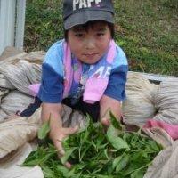 煎茶@¥324<br>500g入り<br>