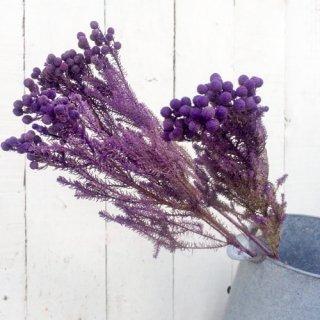 バーゼリア 紫