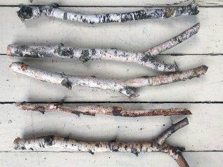 白樺の枝(Mサイズ 長さ約40cm)