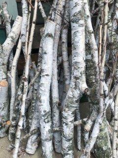 白樺の枝(Lサイズ 長さ100cm〜130cm)